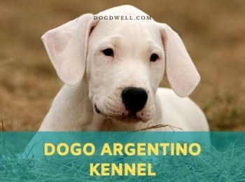 dogo argentino kennel