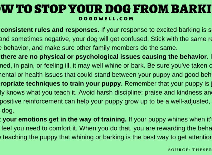 stop dog barking how to stop a dog from barking how to get a dog to stop barking how to stop your dog from barking puppy barking barxstop how to get your dog to stop barking how to stop dog barking at night how to get my dog to stop barking how to stop my dog from barking how to train your dog not to bark dog barking at night bark control how to train a dog to stop barking how to stop dog barking when left alone my dog barks at everything how to stop puppy from barking ultrasonic bark control stop barking how to stop dog barking at neighbours how to stop my dog from biting when excited dog bark control stop dog barking ultrasonic how to train a dog not to bark ultrasonic dog trainer stop puppy barking puppy barking in crate dog barking at nothing how to get a puppy to stop barking how do i stop my dog from barking how do i get my dog to stop barking how do you stop a dog from barking bark deterrent dog barks at everything anti bark anti barking devices dog barking in crate dog barks at other dogs stop neighbor dog barking how to train a puppy not to bark how to get your dog to stop barking at people how to stop barking how to get your dog to stop barking at other dogs how to get your puppy to stop barking dog barking deterrent how to stop dog barking at other dogs puppy barking at night my dog keeps whining outdoor bark control puppy barking at me how to stop my dog barking when out walking anti dog barking how to stop your dog from barking at other dogs how to train your dog to stop barking dog barks at people how to keep a dog from barking my dog barks at other dogs how to stop territorial barking how to stop dog barking at night outside how do dogs bark train dog not to bark how to stop dog barking at people my dog barks at people how to stop neighbors dog from barking petsafe outdoor bark control dog barks when i leave how to stop your puppy from barking get dog to stop barking how to stop my dog barking at other dogs how to stop dog barking at window puppy bark