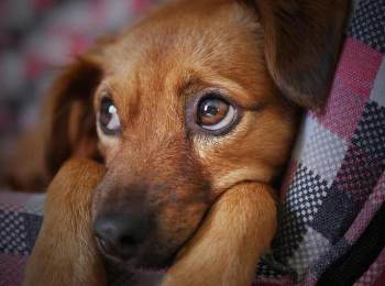 problems associated with orphaned puppies