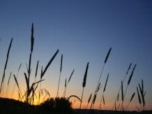 Tjusig solnedgång
