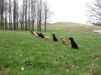 Hundar på kurs...