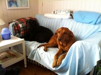 Denna soffa är som gjord för oss!