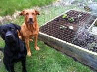 Här har vi nu planterat squash!