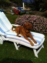 På en sån här solsäng kan man ligga jätteskönt!
