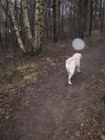 Regn i skog