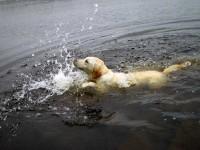 Hugo simmar