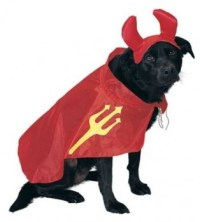 Tuesday Top Ten: Halloween Costumes for Dogs, 2014 Edition ...