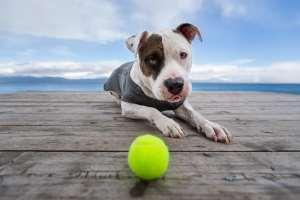 best dog photographer Los Angeles Lake Tahoe