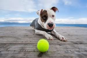 best dog photographer Los Angeles Lake Tahoe