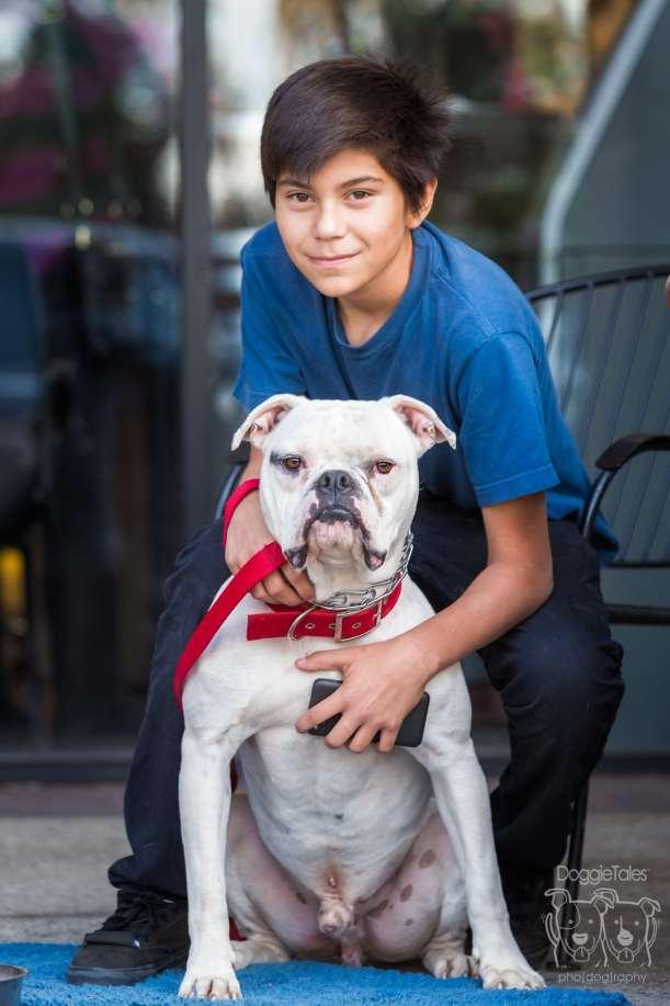 Pit Bull Adoption Rescue
