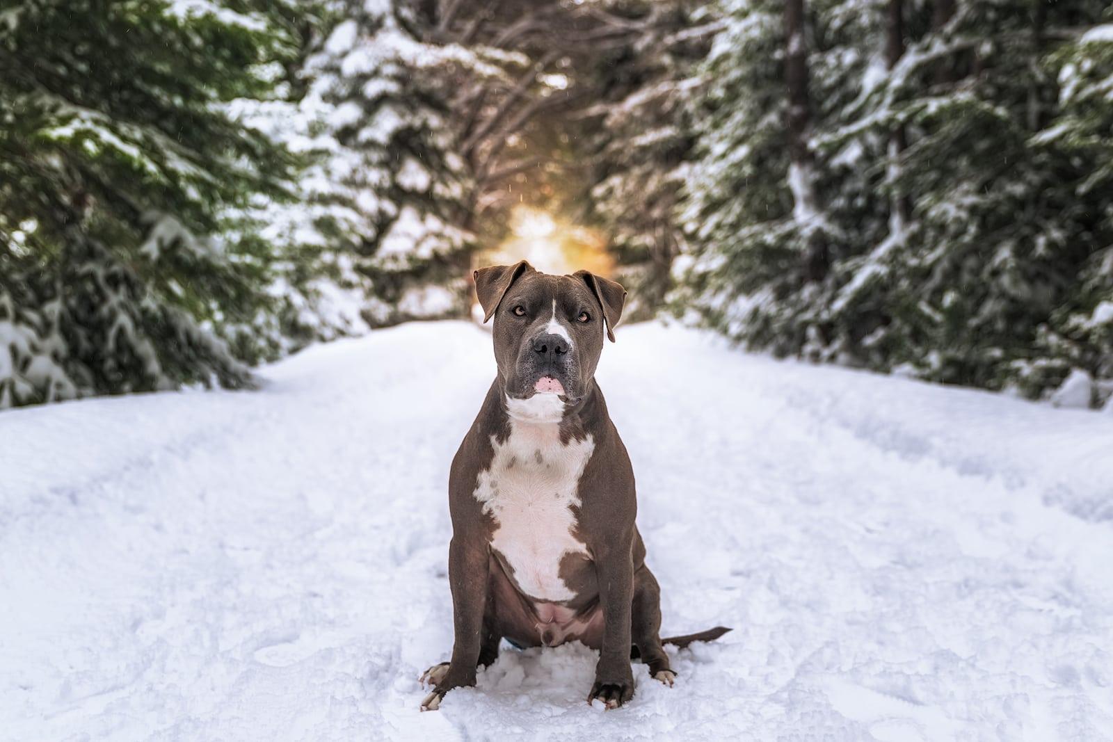 Best Dog Photographer