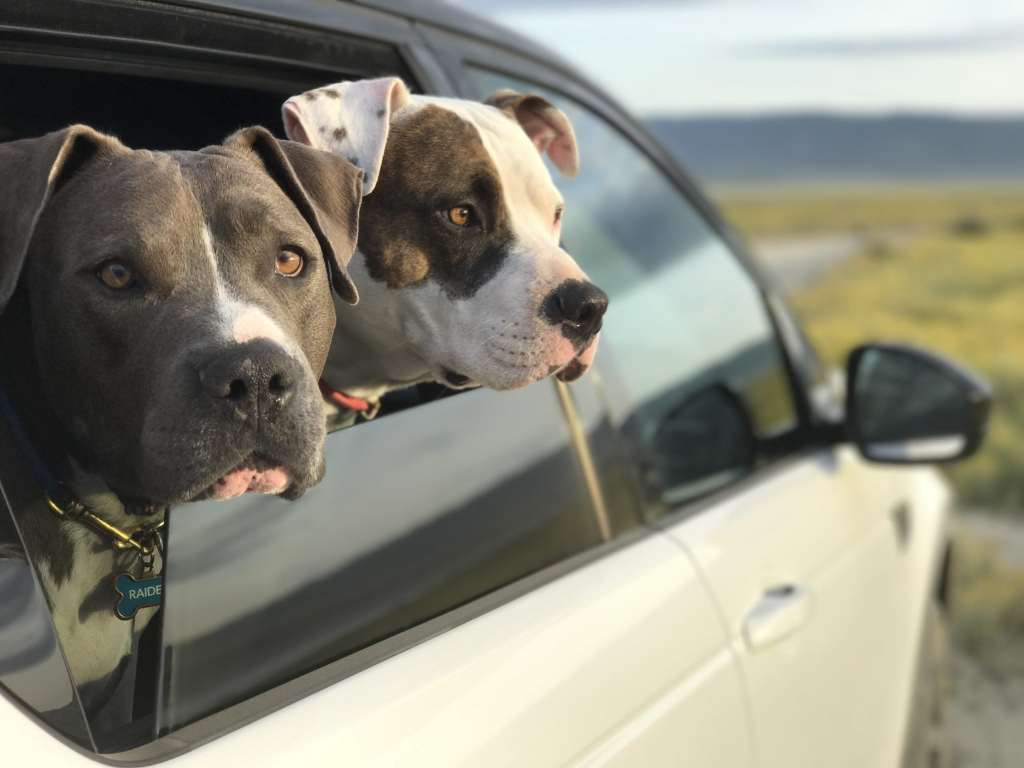 Dogs on a road trip