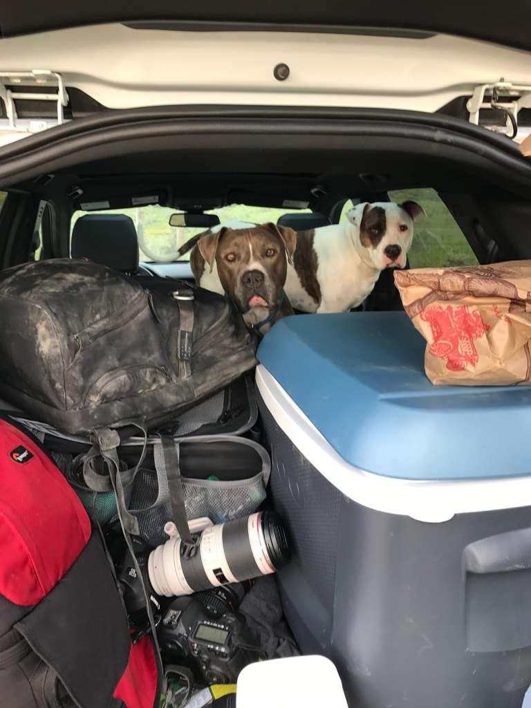 Carrizo Plain Road Trip Doggie