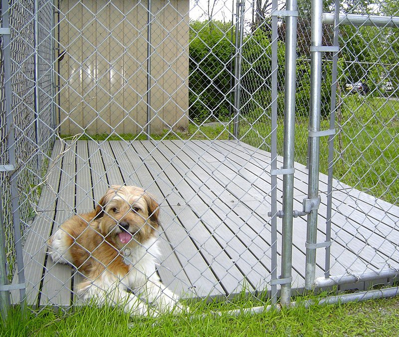 outdoor dog kennels reviews guides