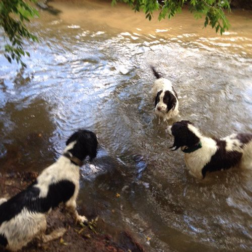 dog walkers walking in lake