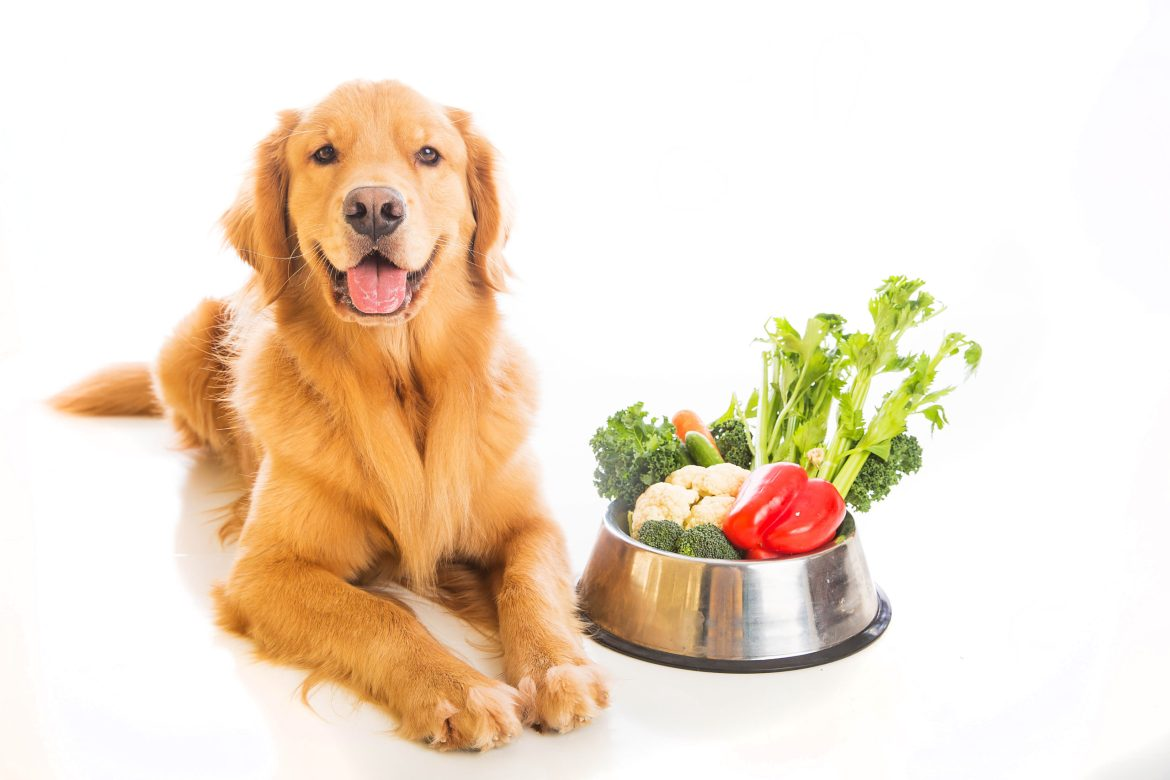 Golden retriever sitting next bowl of food filled with vegetables