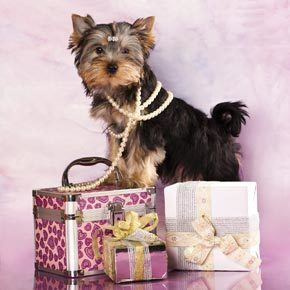 Are You Wearing Dog Jewelry  The Dogington Post