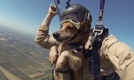 man takes his dog skydiving Archives  The Dogington Post