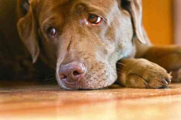 Image result for dog in sad