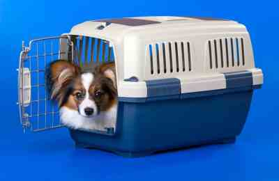 Crate Training 101 - The Dogington Post