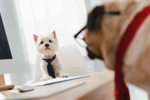 Starting a Pet Business? Tips to Ensure Success - The Dogington Post