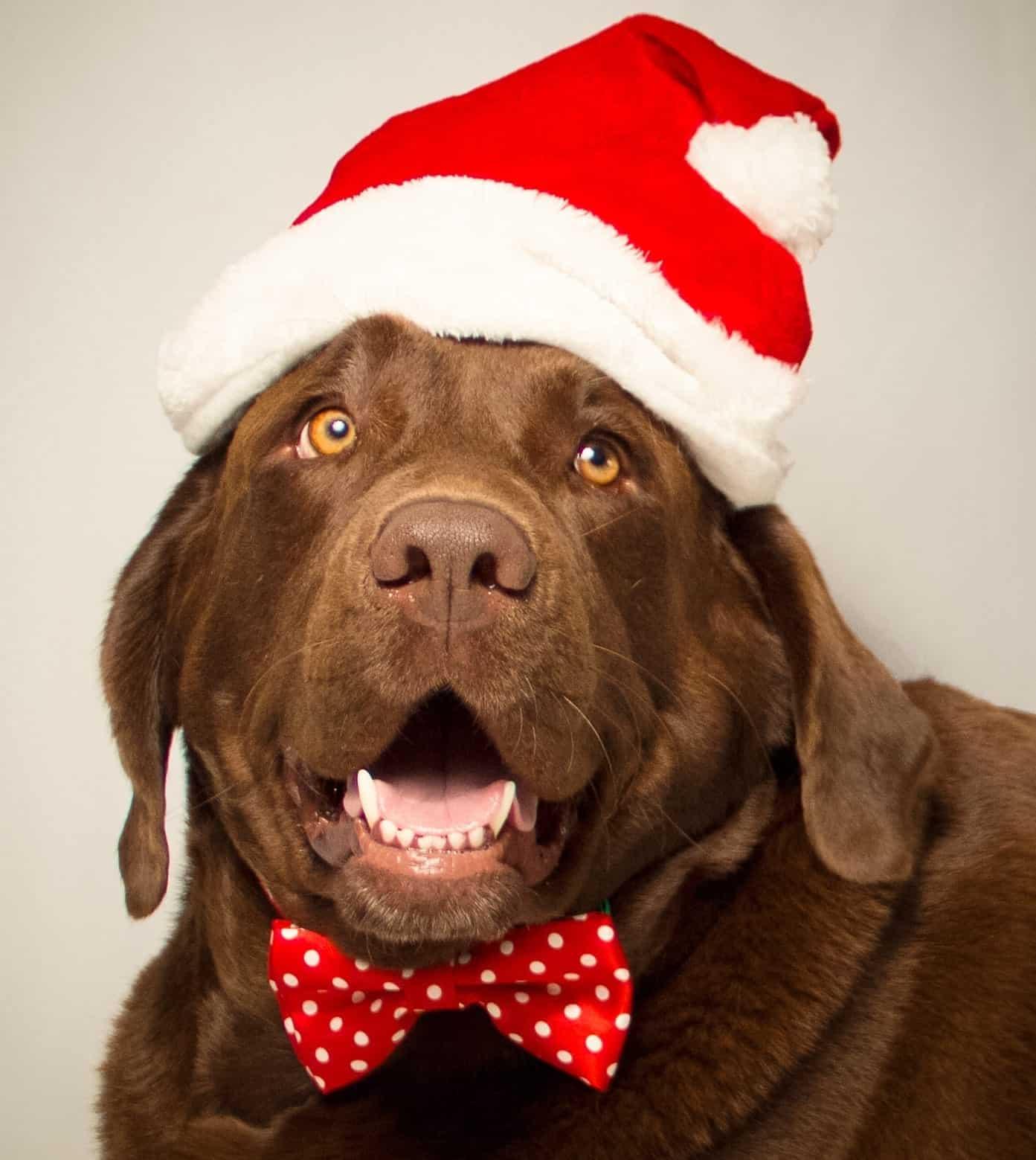 Secret Santa Dog Is Good