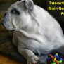 Interactive Dog Toys Brain Games For Smart Pooches Dogizone