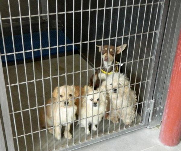 4 Little Dogs