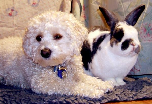 I do like our rabbit, Paris, but does he like me?