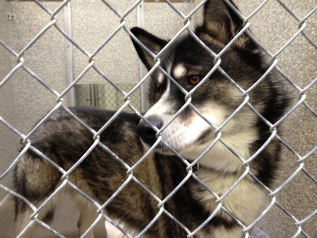 I have been in the Sonoma County Shelter for a month, please take me home.