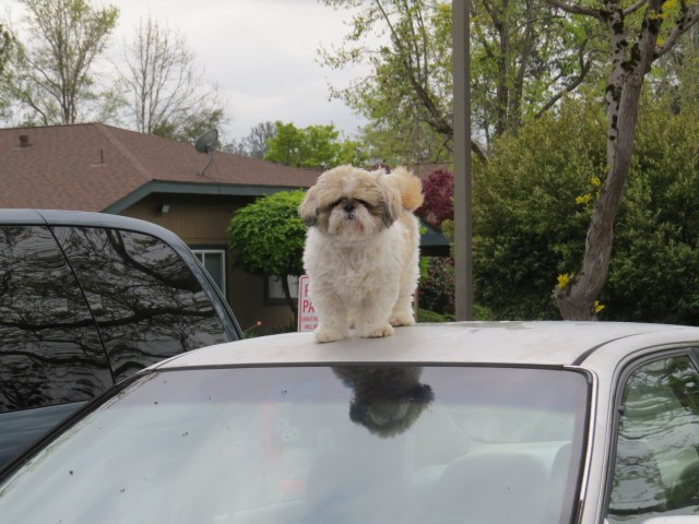 Hey there, I see you. Better no touch my car.