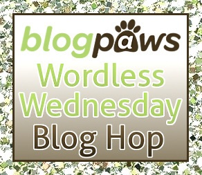 Join the Blog Paws Community.