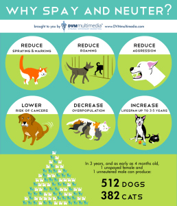 Be smart spay or neuter!