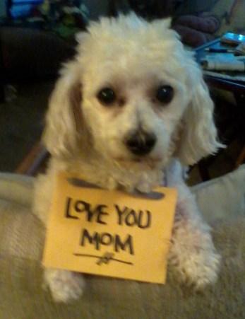 Sid sign Love mom