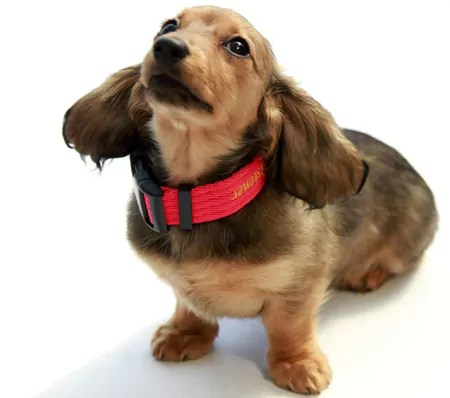 Would you neuter a dog as young as this?? THe RSPCA Will