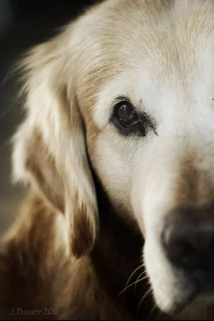 Old dogs also need care, love and attention too.