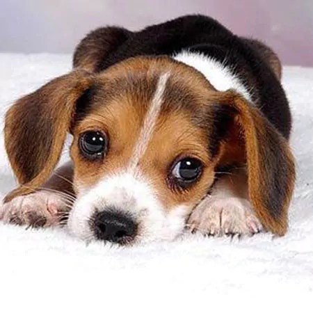 Puppy Playpens can be very helpful for the puppy and for your furniture and wiring