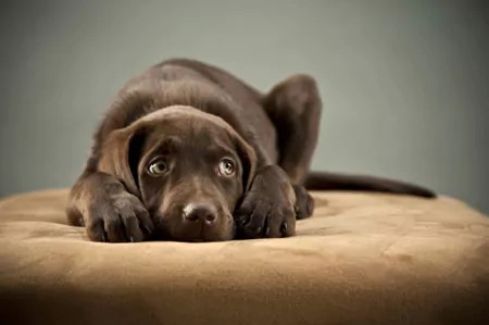 Neutering can increase aggression and make dogs fearful