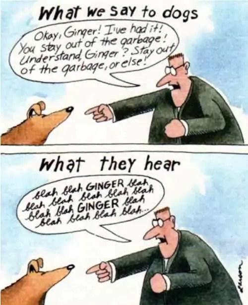 dog communication cartoon