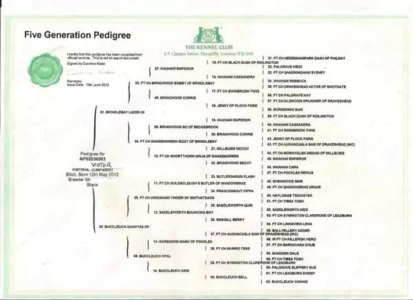 Altered Pedigree Certificate