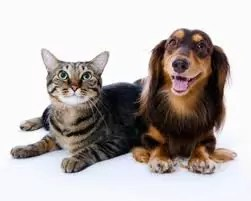 Top dog and cat names 2013