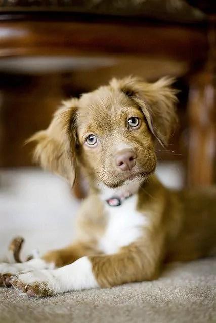 Understanding Veterinary Terms, Simply