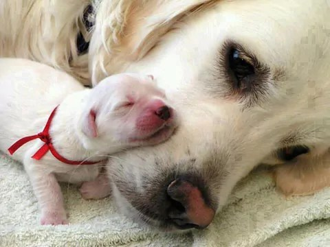 Puppies can learn obsessive behaviour from mum