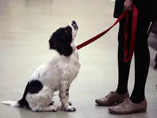 Stan Rawlinson Leading Dog Behaviourist and Puppy Expert Puppy Classes socialisation classes