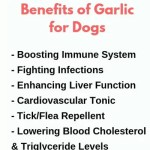 garlic-benefits-dogs