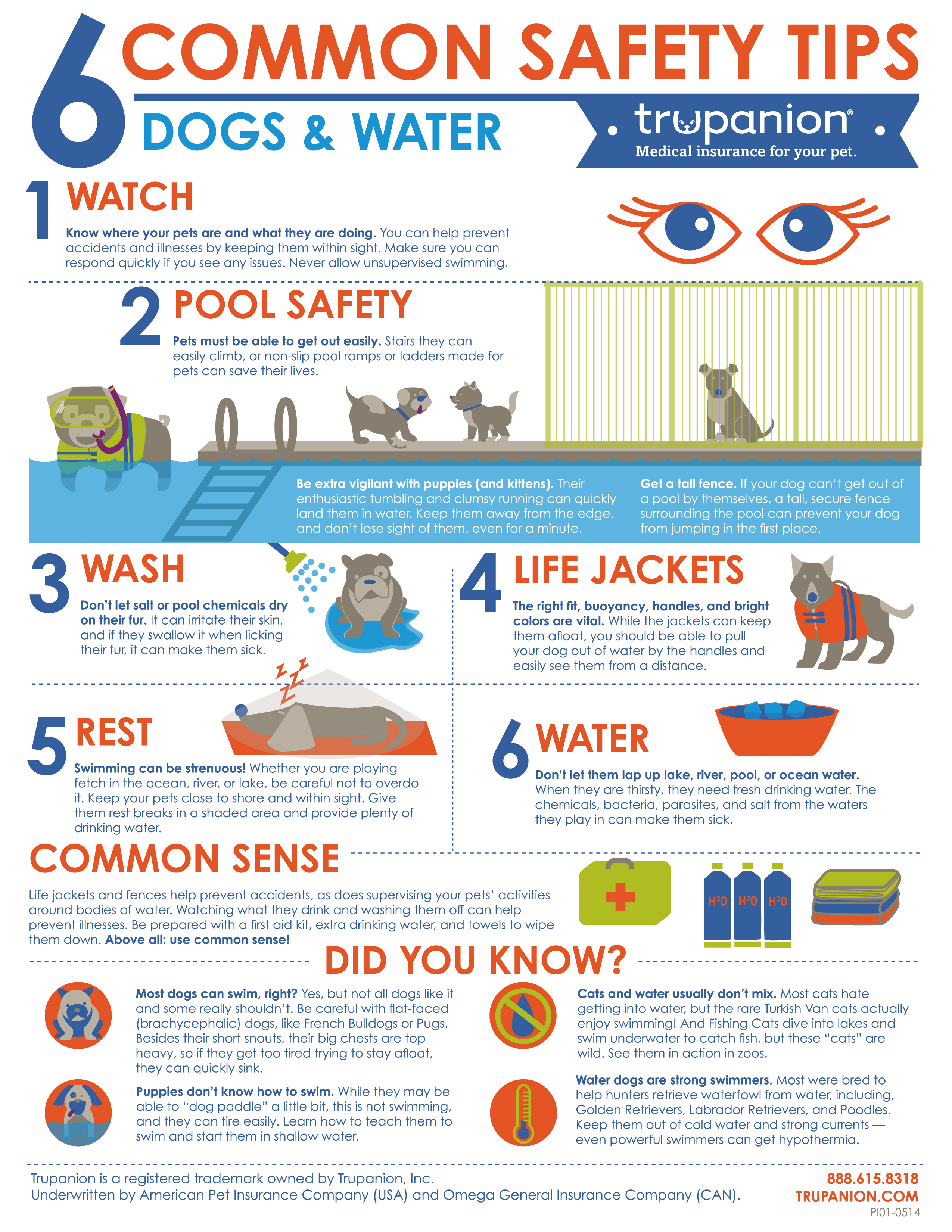 summer infant beach chair bedroom ireland water safety tips from trupanion | dog living