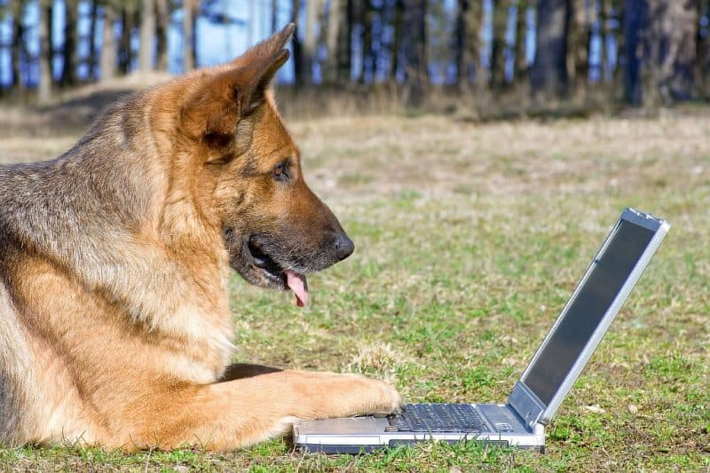 Image result for german shepherd on computer