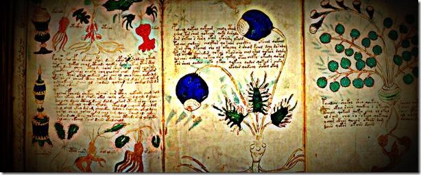 manuscrito voynich-02