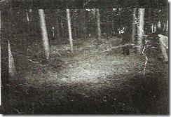 rendlesham_forest