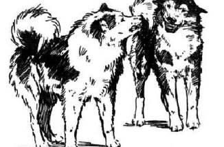 Dog Attacks -Why Blaming Breeds is Missing The Point 1